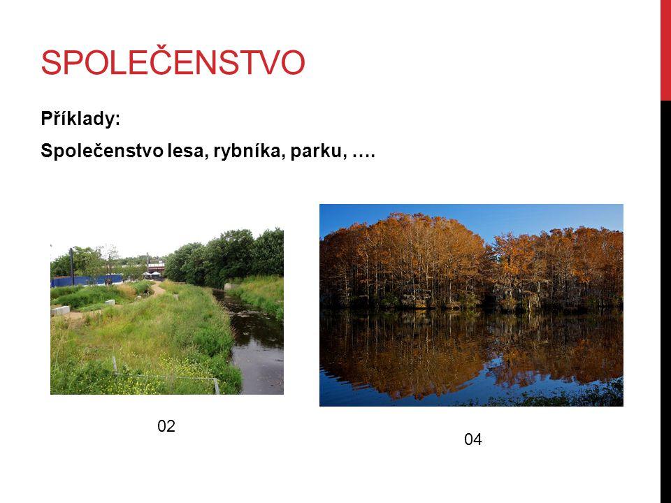 SPOLEČENSTVO Příklady: Společenstvo lesa, rybníka, parku, …. 02 04