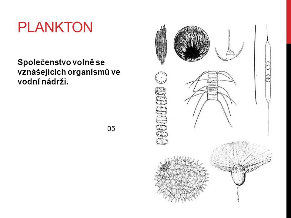 PLANKTON Společenstvo volně se vznášejících organismů ve vodní nádrži. 05
