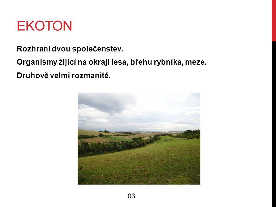 EKOTON Rozhraní dvou společenstev. Organismy žijící na okraji lesa, břehu rybníka, meze.