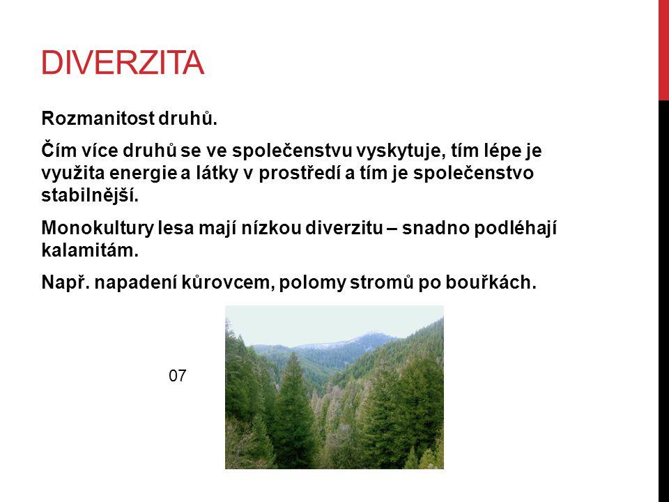 POLOM LESA PO HURIKÁNU 10