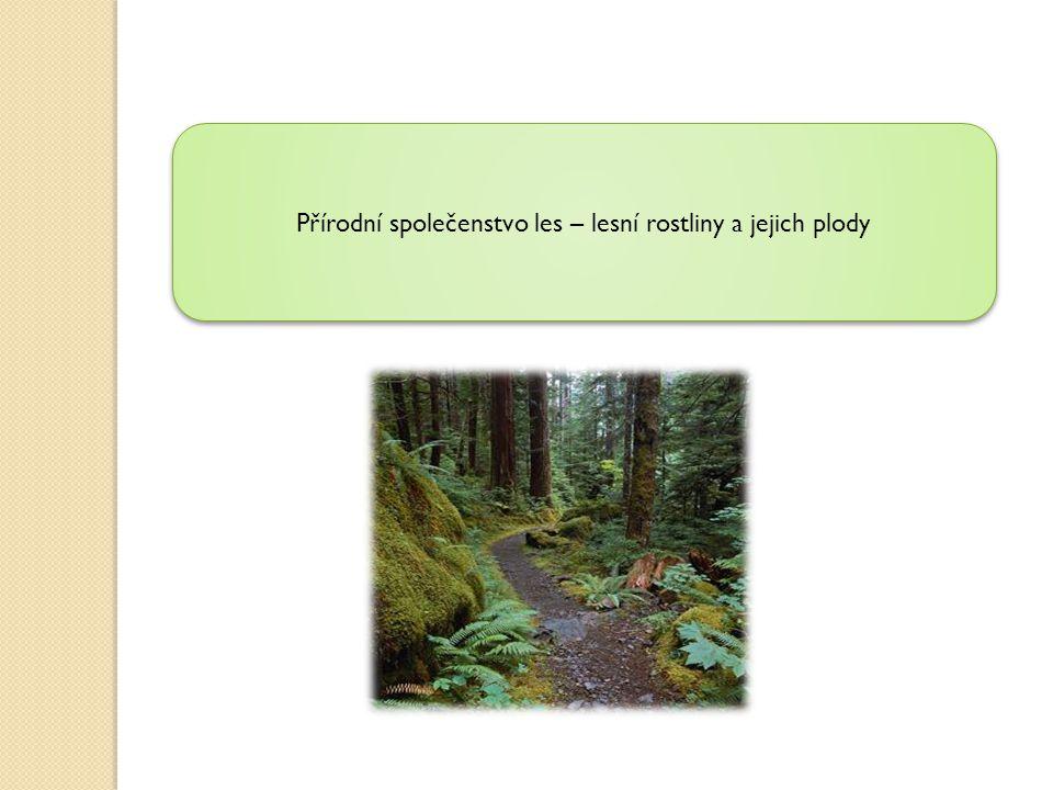 Přírodní společenstvo les – lesní rostliny a jejich plody