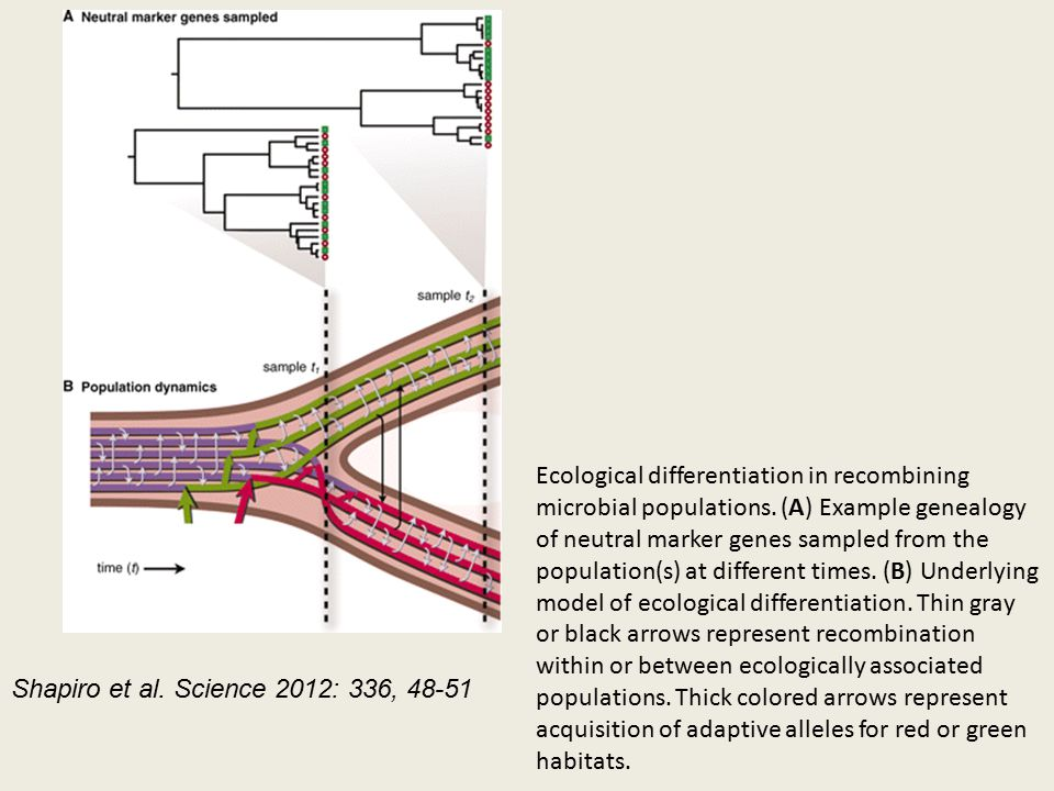 Ecological differentiation in recombining microbial populations.