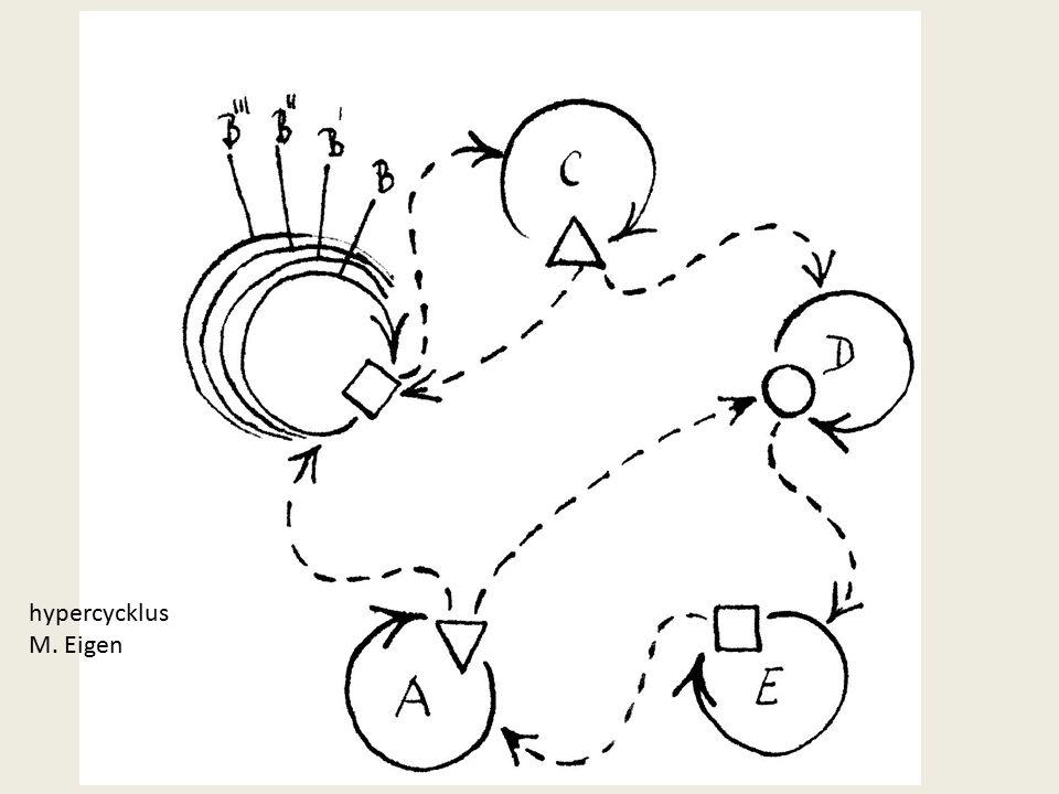 hypercycklus M. Eigen
