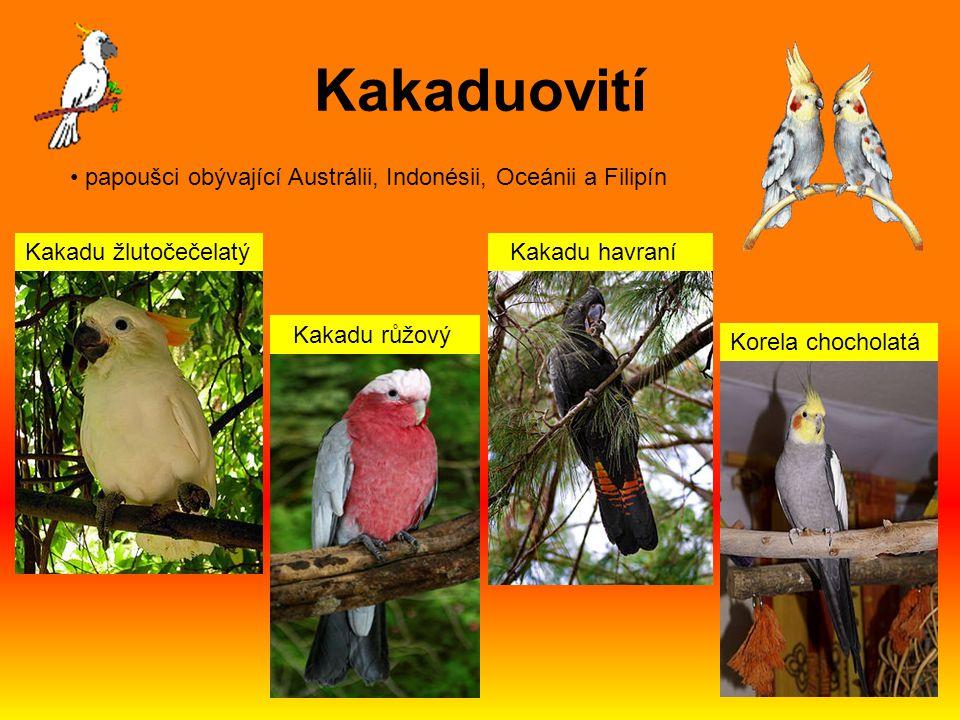 papoušci obývající Austrálii, Indonésii, Oceánii a Filipín Kakadu žlutočečelatý Kakadu růžový Kakadu havraní Korela chocholatá