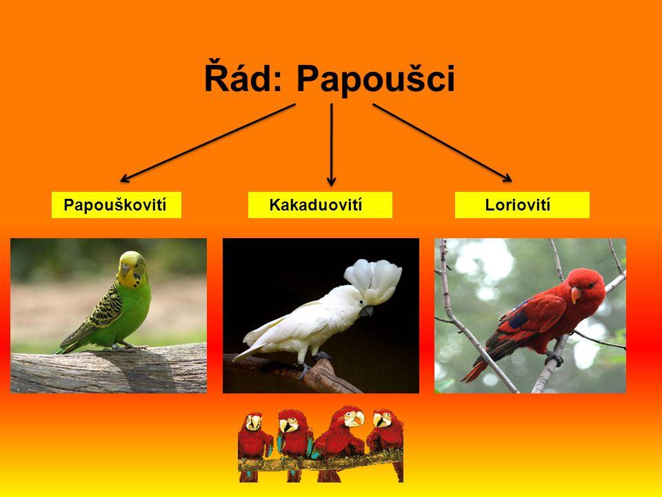 Řád: Papoušci Papouškovití Kakaduovití Loriovití