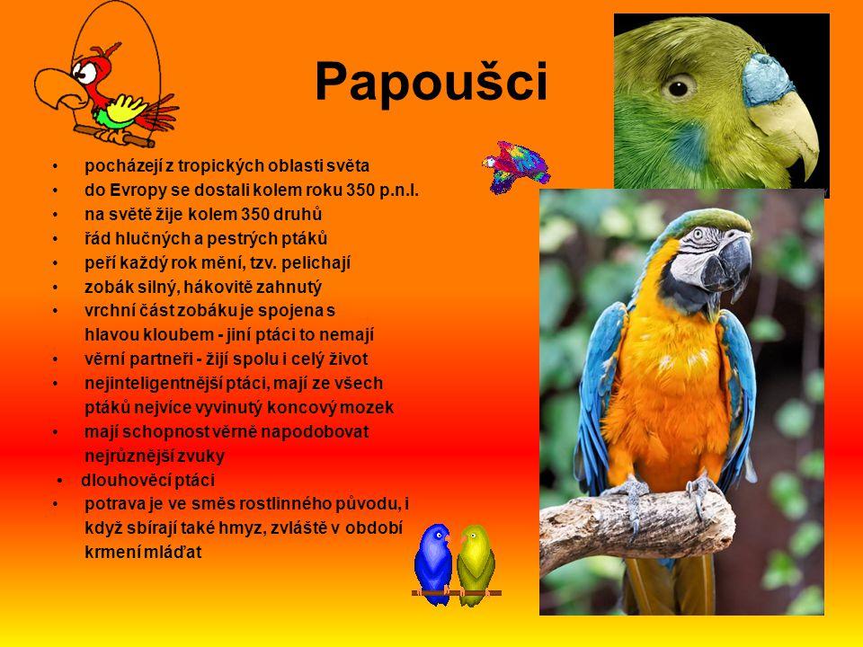 Papoušci pocházejí z tropických oblasti světa do Evropy se dostali kolem roku 350 p.n.l. na světě žije kolem 350 druhů řád hlučných a pestrých ptáků p