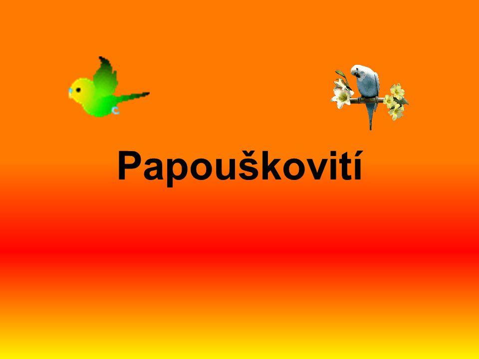 Papoušek vlnkovaný malý papoušek původem z Austrálie dožívá se až 10 let v zajetí vyšlechtili také žlutou, bílou, modrou i další barevné variace, kromě červené sameček se od samičky liší barvou ozobí původní forma