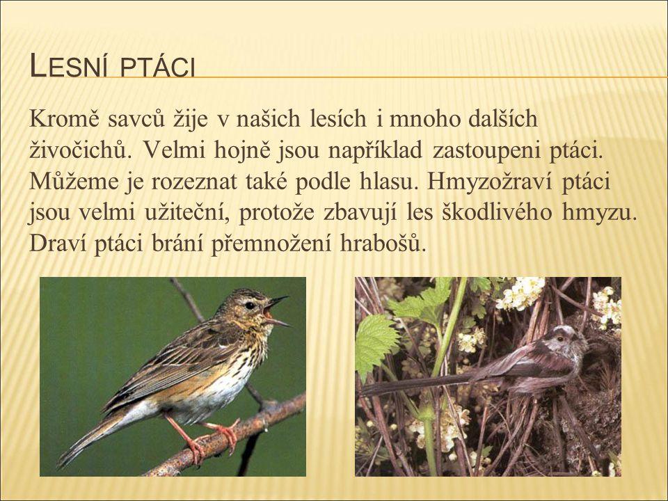L ESNÍ PTÁCI Kromě savců žije v našich lesích i mnoho dalších živočichů. Velmi hojně jsou například zastoupeni ptáci. Můžeme je rozeznat také podle hl