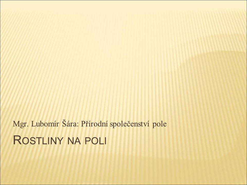 R OSTLINY NA POLI Mgr. Lubomír Šára: Přírodní společenství pole