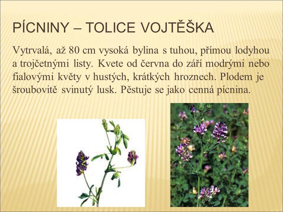 PÍCNINY – TOLICE VOJTĚŠKA Vytrvalá, až 80 cm vysoká bylina s tuhou, přímou lodyhou a trojčetnými listy. Kvete od června do září modrými nebo fialovými