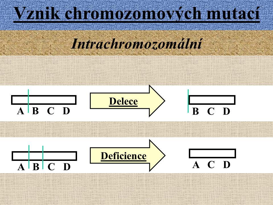 A B C D Vznik chromozomových mutací Intrachromozomální B C D Delece Deficience A B C D A C D
