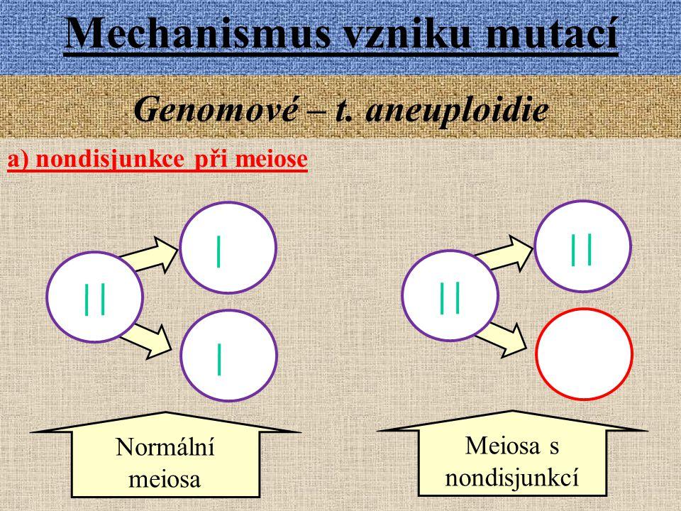 Mechanismus vzniku mutací Genomové – t. aneuploidie a) nondisjunkce při meiose Meiosa s nondisjunkcí Normální meiosa