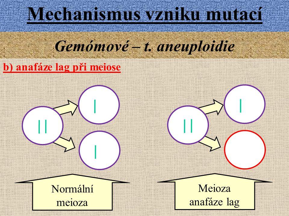 Mechanismus vzniku mutací Gemómové – t. aneuploidie b) anafáze lag při meiose Meioza anafáze lag Normální meioza