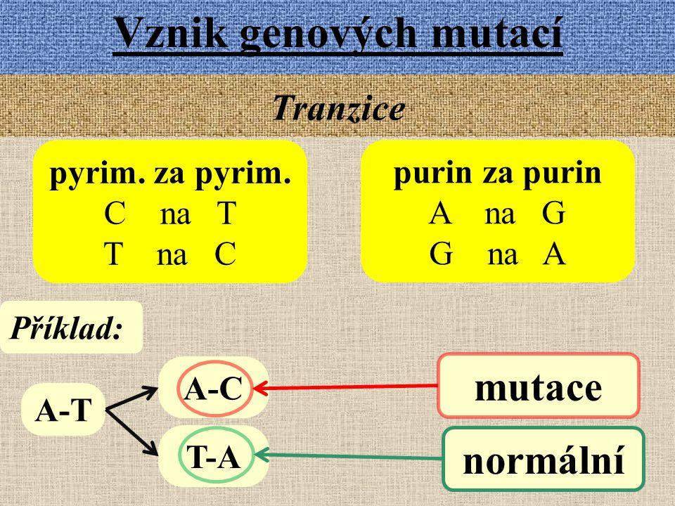 Vznik genových mutací Tranzice pyrim. za pyrim. C na T T na C purin za purin A na G G na A A-T A-C T-A Příklad: mutace normální