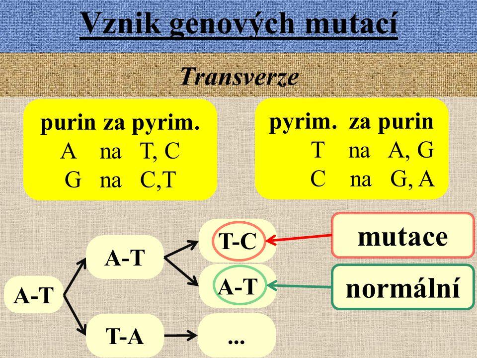Vznik genových mutací Transverze purin za pyrim. A na T, C G na C,T pyrim. za purin T na A, G C na G, A A-T T-C A-T mutace normální A-T T-A...