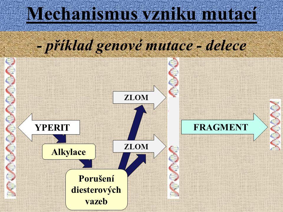 Mechanismus vzniku mutací - příklad genové mutace - delece YPERIT Alkylace Porušení diesterových vazeb ZLOM FRAGMENT ZLOM