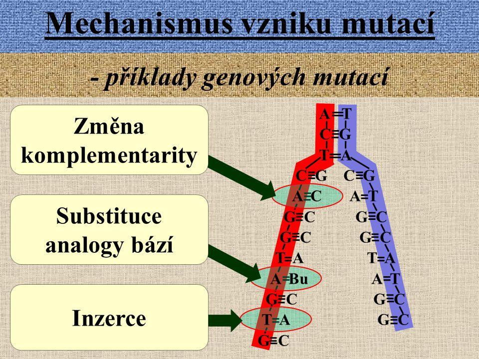 Mechanismus vzniku mutací - příklady genových mutací Substituce analogy bází Inzerce Změna komplementarity A T C G T A C G A C A T G C T A A Bu A T G