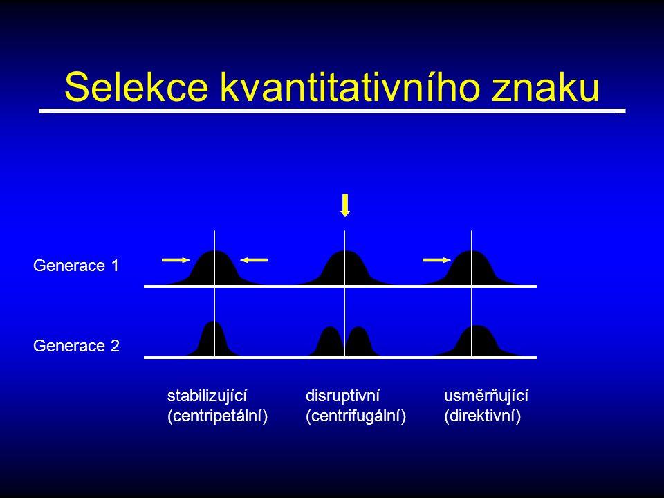 Selekce kvantitativního znaku Generace 1 Generace 2 stabilizující (centripetální) disruptivní (centrifugální) usměrňující (direktivní)