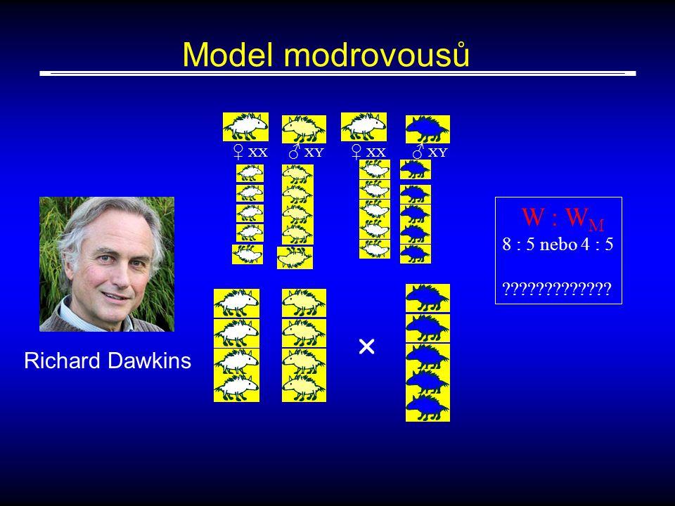 Model modrovousů ♀ XX ♂ XY ♀ XX ♂ XY  W : W M 8 : 5 nebo 4 : 5 ????????????? Richard Dawkins