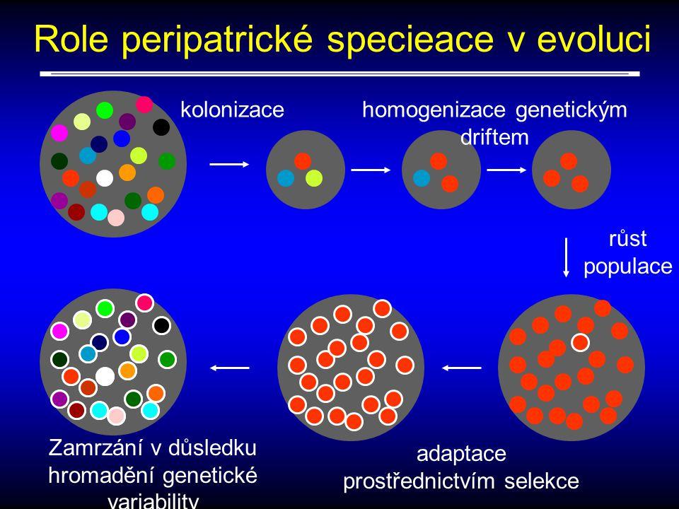 kolonizace Role peripatrické specieace v evoluci růst populace homogenizace genetickým driftem adaptace prostřednictvím selekce Zamrzání v důsledku hromadění genetické variability