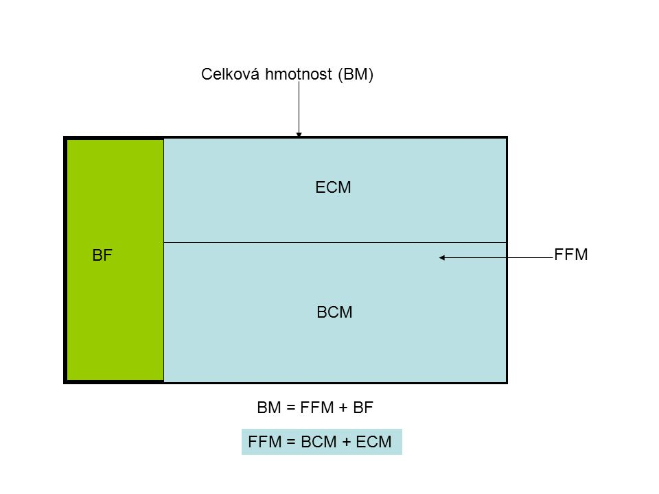 BCM Celková hmotnost (BM) BF ECM FFM BM = FFM + BF FFM = BCM + ECM