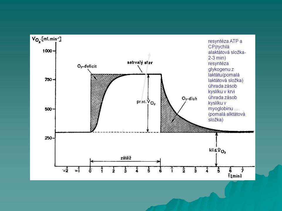 resyntéza ATP a CP(rychlá alaktátová složka- 2-3 min) resyntéza glykogenu z laktátu(pomalá laktátová složka) úhrada zásob kyslíku v krvi úhrada zásob
