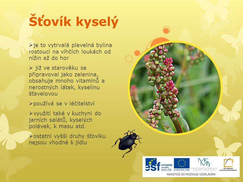 Šťovík kyselý  je to vytrvalá plevelná bylina rostoucí na vlhčích loukách od nížin až do hor  již ve starověku se připravoval jako zelenina, obsahuj