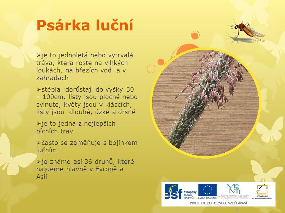 Psárka luční  je to jednoletá nebo vytrvalá tráva, která roste na vlhkých loukách, na březích vod a v zahradách  stébla dorůstají do výšky 30 – 100c