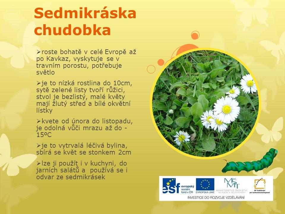 Sedmikráska chudobka  roste bohatě v celé Evropě až po Kavkaz, vyskytuje se v travním porostu, potřebuje světlo  je to nízká rostlina do 10cm, sytě