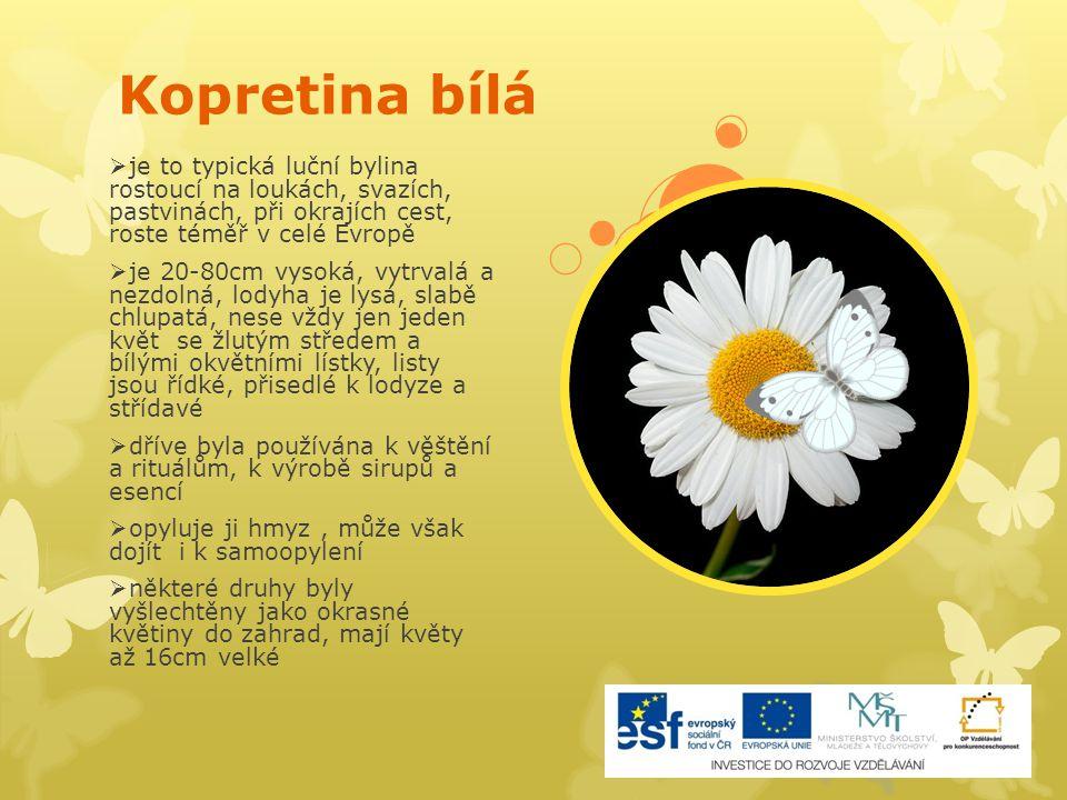 Kopretina bílá  je to typická luční bylina rostoucí na loukách, svazích, pastvinách, při okrajích cest, roste téměř v celé Evropě  je 20-80cm vysoká