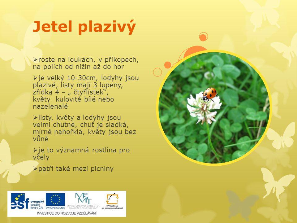 Kohoutek luční  je to dvouletá až vytrvalá bylina rozšířená po celé Evropě, roste na vlhčích loukách  dorůstá 30-80cm, listy jsou drsné a čárkovité, květy jsou růžové, rozvětvené  květy opylují denní motýli s dlouhým sosákem