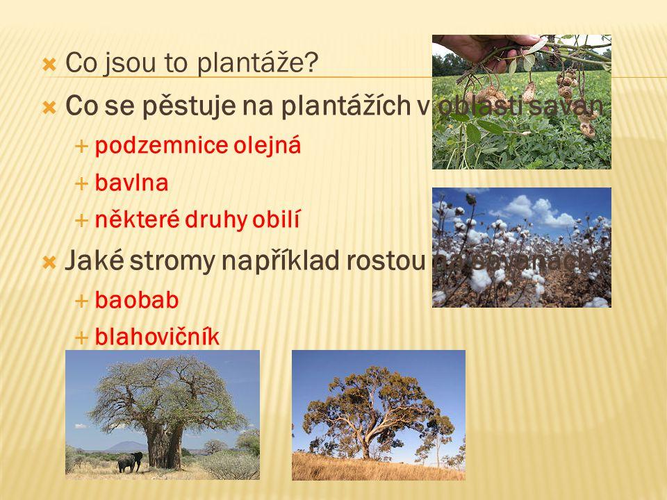 Savany - travnaté porosty s ojedinělými stromy a keři - střídají se období dešťů a sucha - rozkládají se v tropickém pásu (Afrika, Amerika, Austrálie, Asie) - zvířata: žirafy, antilopy, sloni, lvi...