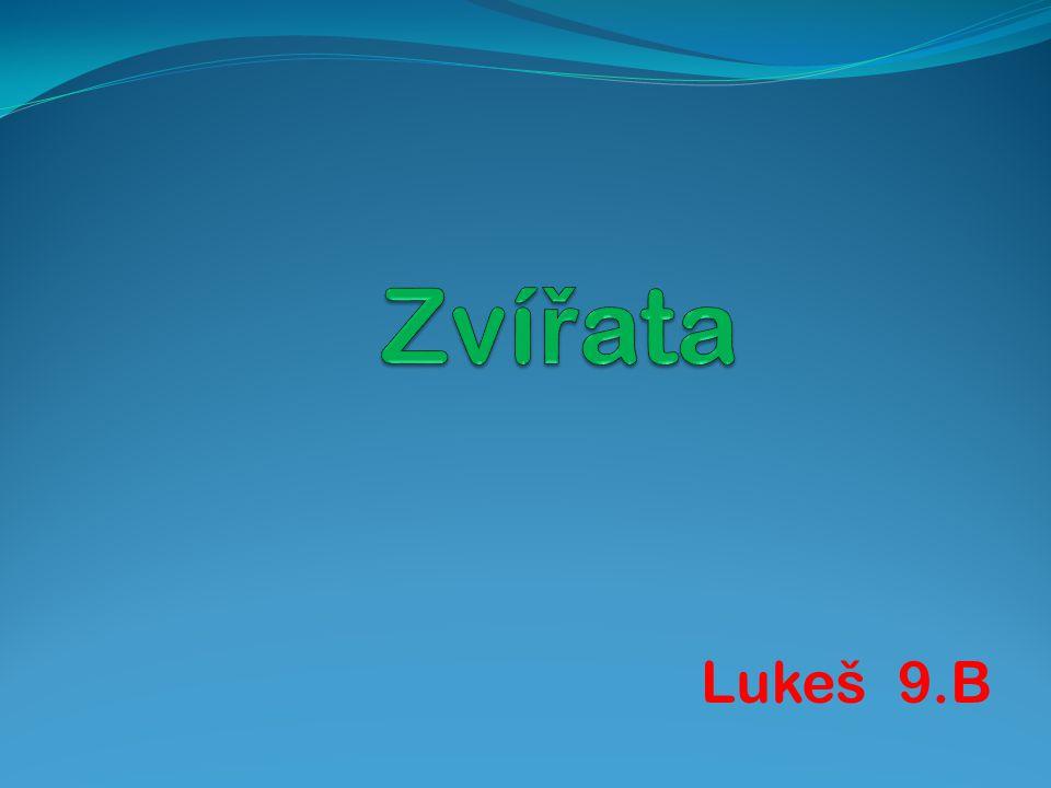 Lukeš 9.B
