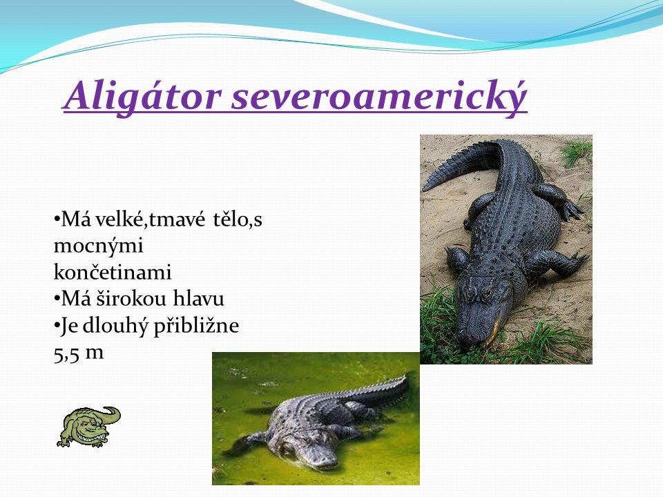 Aligátor severoamerický Má velké,tmavé tělo,s mocnými končetinami Má širokou hlavu Je dlouhý přibližne 5,5 m