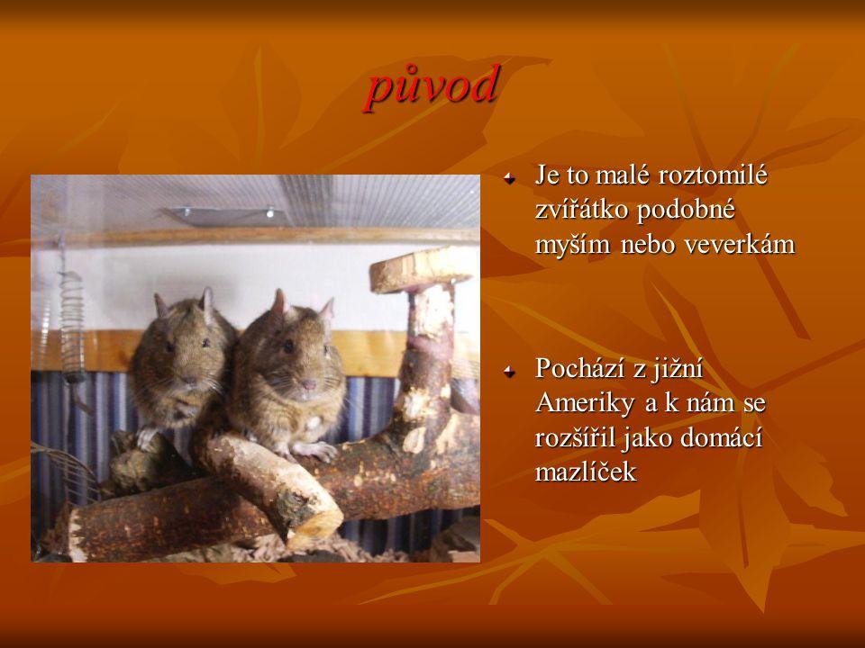 původ Je to malé roztomilé zvířátko podobné myším nebo veverkám Pochází z jižní Ameriky a k nám se rozšířil jako domácí mazlíček