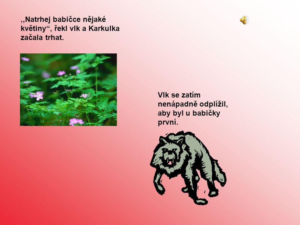 ,,Natrhej babičce nějaké květiny , řekl vlk a Karkulka začala trhat.