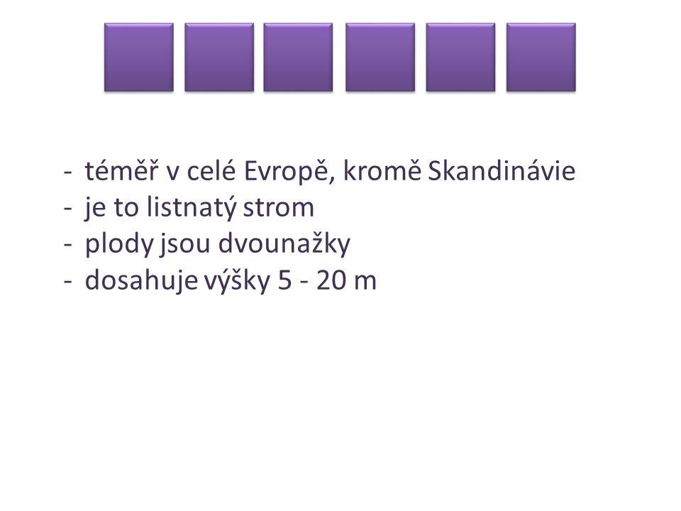 -téměř v celé Evropě, kromě Skandinávie -je to listnatý strom -plody jsou dvounažky -dosahuje výšky 5 - 20 m