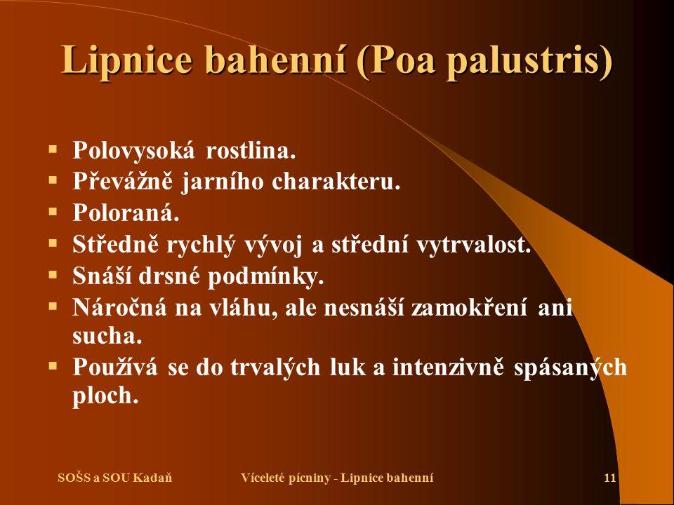 SOŠS a SOU KadaňVíceleté pícniny - Lipnice bahenní11 Lipnice bahenní (Poa palustris)  Polovysoká rostlina.