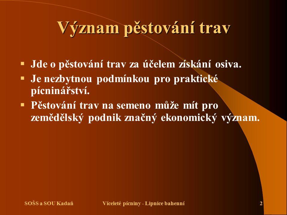 SOŠS a SOU KadaňVíceleté pícniny - Lipnice bahenní2 Význam pěstování trav  Jde o pěstování trav za účelem získání osiva.