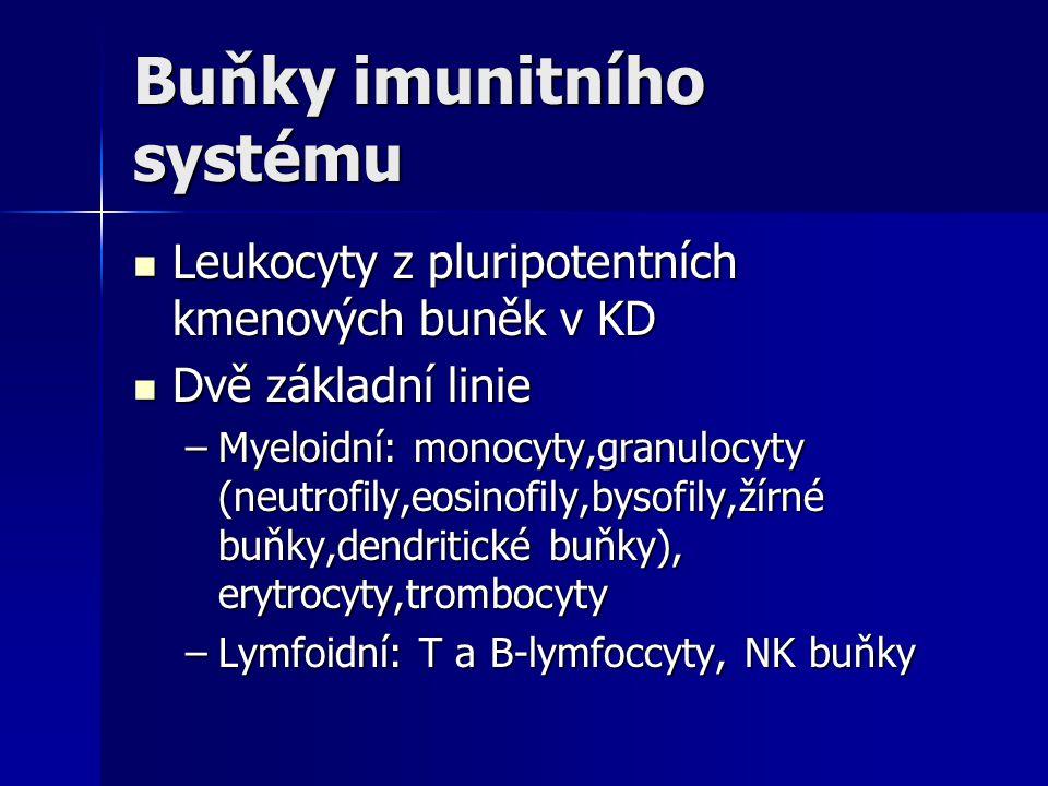 Buňky imunitního systému Leukocyty z pluripotentních kmenových buněk v KD Leukocyty z pluripotentních kmenových buněk v KD Dvě základní linie Dvě zákl