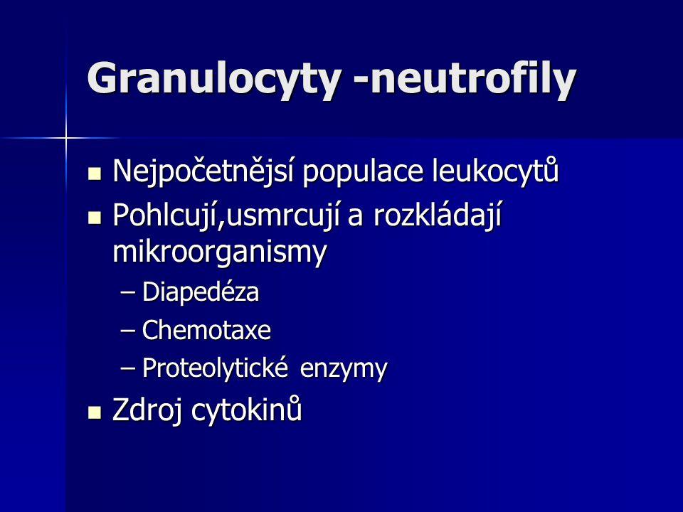 Granulocyty -neutrofily Nejpočetnějsí populace leukocytů Nejpočetnějsí populace leukocytů Pohlcují,usmrcují a rozkládají mikroorganismy Pohlcují,usmrc