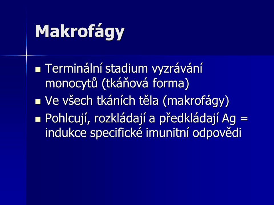 Makrofágy Terminální stadium vyzrávání monocytů (tkáňová forma) Terminální stadium vyzrávání monocytů (tkáňová forma) Ve všech tkáních těla (makrofágy