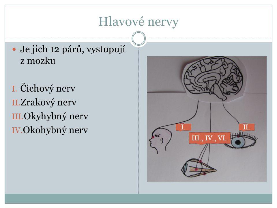 V. Trojklanný nerv VI. Okohybný nerv VII. Lícní nerv VIII. Sluchově – rovnovážný nerv V. VII. VIII.