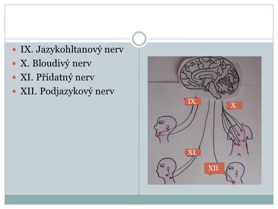 IX. Jazykohltanový nerv X. Bloudivý nerv XI. Přídatný nerv XII. Podjazykový nerv IX. X. XI. XII.