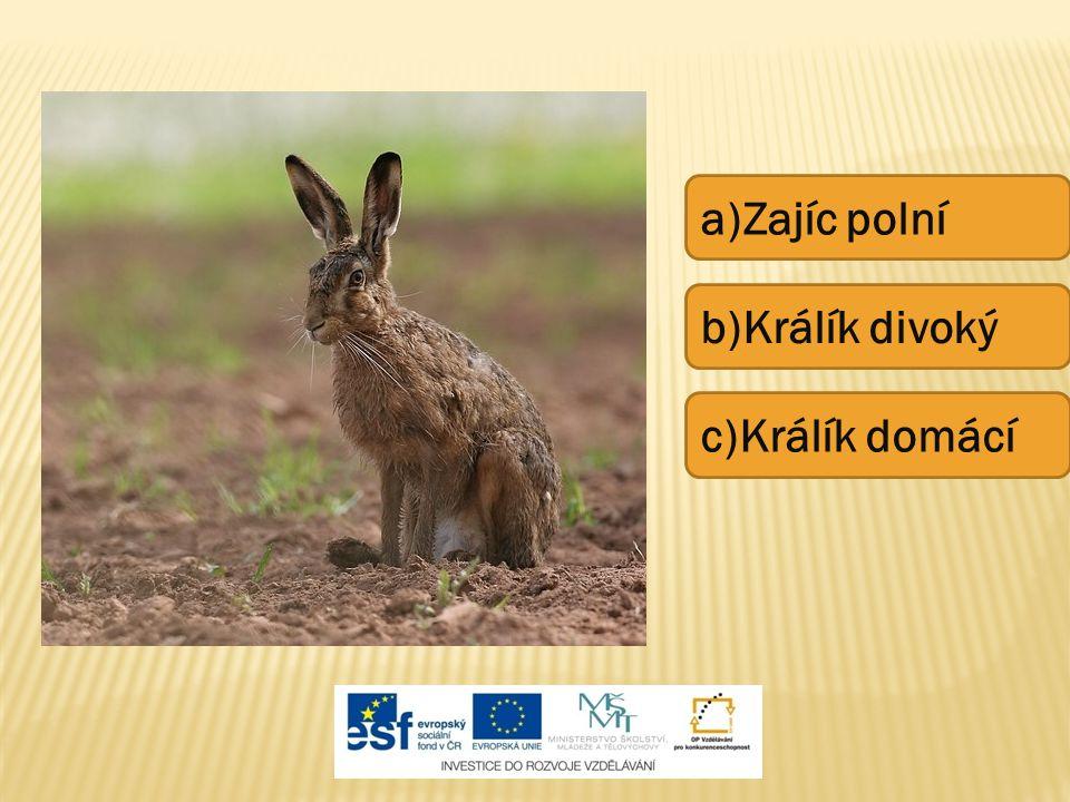 a)Zajíc polní b)Králík divoký c)Králík domácí