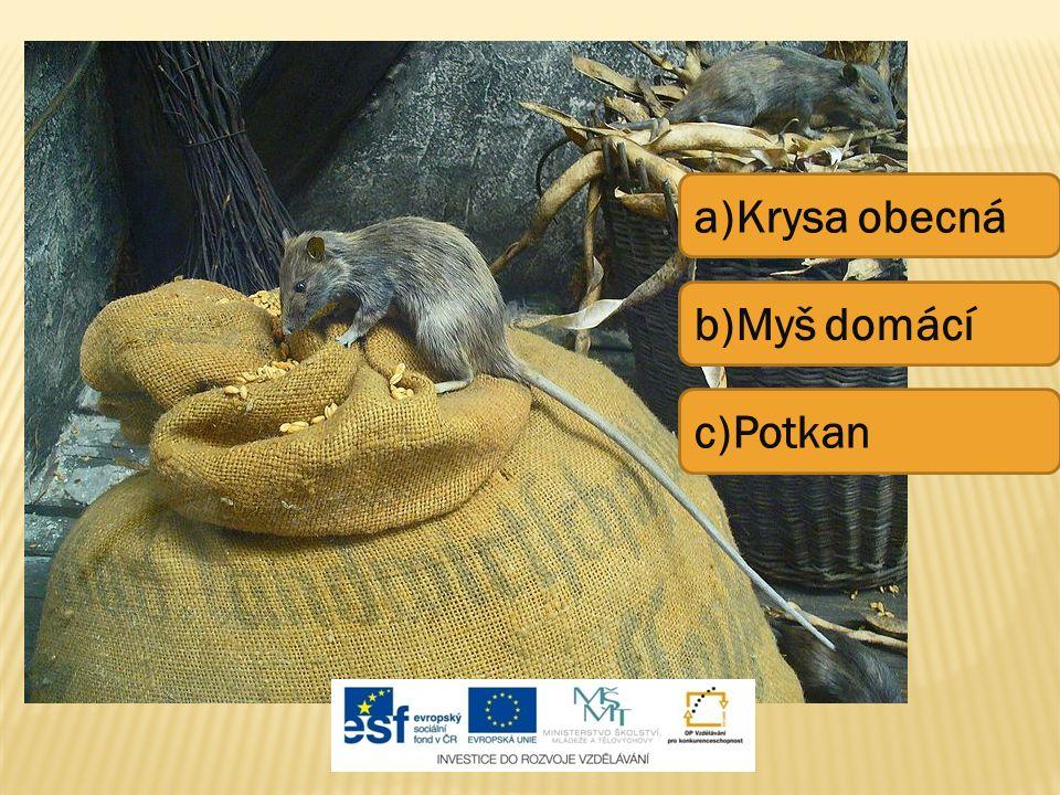 a)Krysa obecná b)Myš domácí c)Potkan