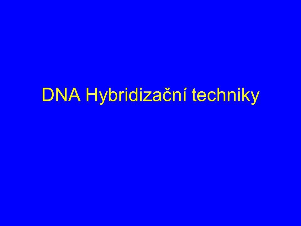 DNA Hybridizační techniky