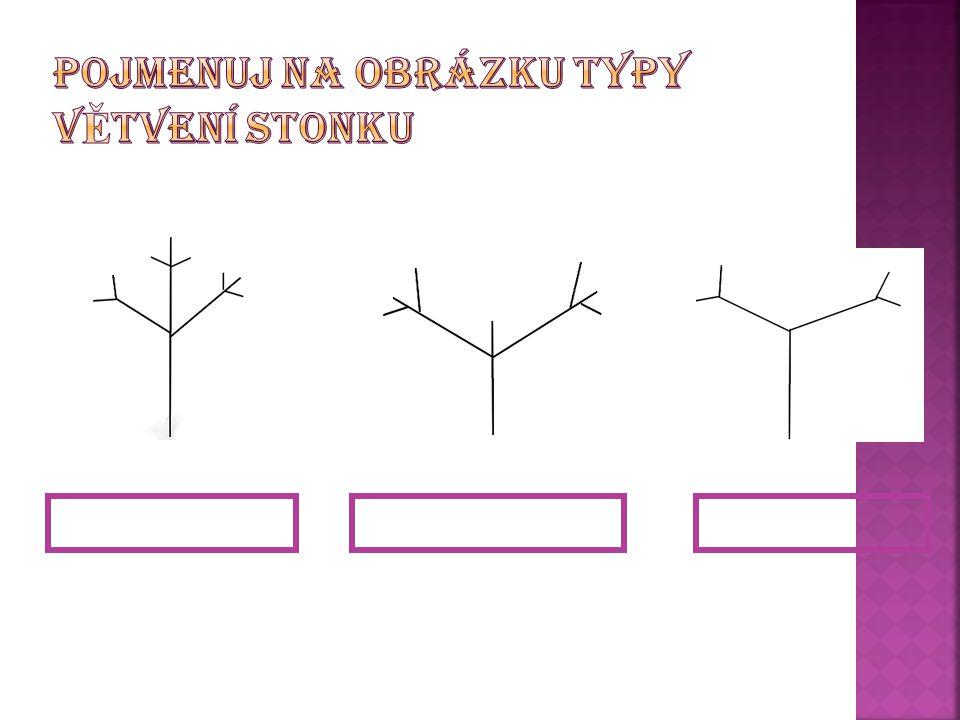 Urči typ žilnatiny u následujících listů 1.2. 3.4. 2.souběžná 4.zpeřená 1.rovnoběžná 3.vidličnatá