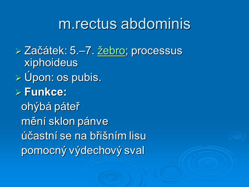 m.rectus abdominis  Začátek: 5.–7. žebro; processus xiphoideus žebro  Úpon: os pubis.  Funkce: ohýbá páteř ohýbá páteř mění sklon pánve mění sklon