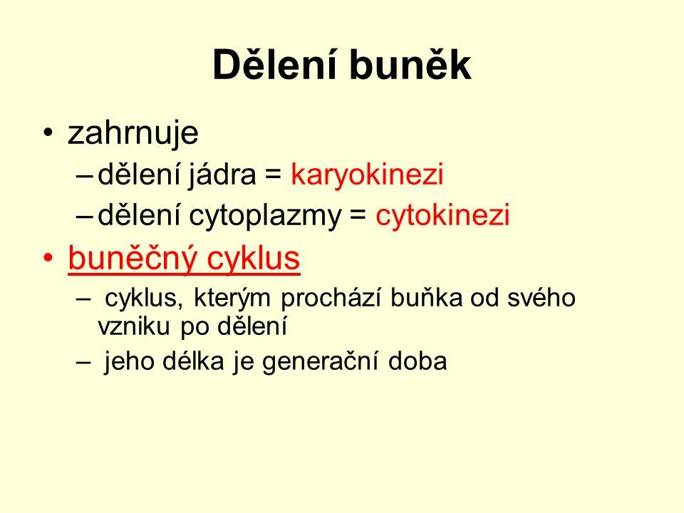 Dělení buněk zahrnuje –dělení jádra = karyokinezi –dělení cytoplazmy = cytokinezi buněčný cyklus – cyklus, kterým prochází buňka od svého vzniku po dě